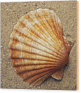 Shell On The Sand Wood Print