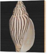 Shell Pattern - Bw Wood Print