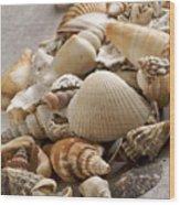 Shellfish Shells Wood Print