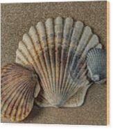 Shells 1 Wood Print