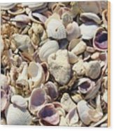 Shells Aplenty Wood Print