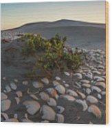 Shells At Desert Wood Print
