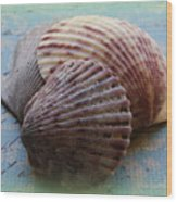 Shells Wood Print by Diane Reed