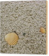 Shells In The Sand Wood Print