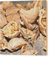 Shells Of Nut Wood Print