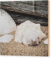 Shells On The Beach Wood Print
