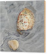 Shells On The Beach II Wood Print