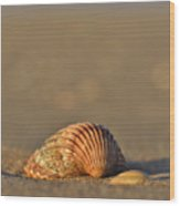 Shells On The Shore Wood Print