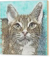 Shelter Cat Fantasy Art Wood Print