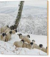 Sheltering Flock Wood Print