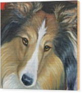 Sheltie - Collie Wood Print