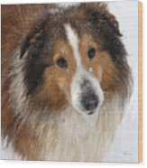 Sheltie In The Snow Wood Print