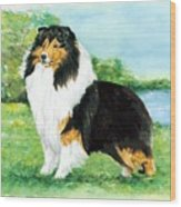 Sheltie Wait Wood Print