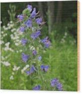 Shenandoah Wildflowers Wood Print