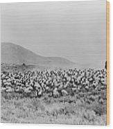 Shepherd And Flock, C1942 Wood Print