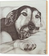 Shepherd Dog Frieda Wood Print