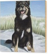 Shepherd Mix Timmy Wood Print