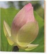 Sherbert Flower Wood Print