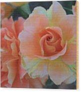 Sherbert Rose Wood Print