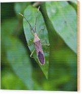 Shield Bug Wood Print