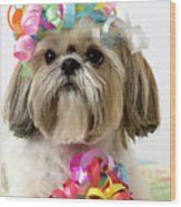 Shih Tzu Dog Wood Print