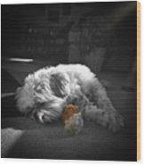 Shih Tzu Sleeping In The Sun Wood Print