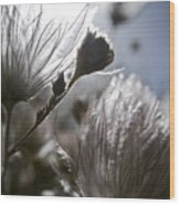 Shimmering Flower II Wood Print by Ray Laskowitz - Printscapes