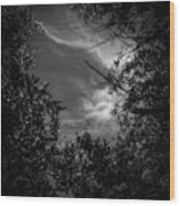 Shimmering Tree Branches Wood Print