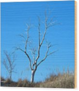 Shimmering Tree Wood Print