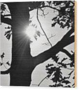 Shine Through Wood Print