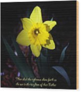 Shining Daffodil Wood Print