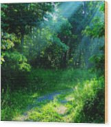 Shining Light Wood Print