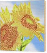 Shining Sunflowers Wood Print