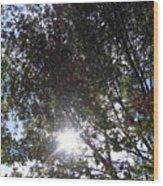 Shinning Sun Wood Print