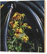 Shiny Black Tire Surrounding Black Eyed Surrounding Black Eyed Susans Bluish Background 2 932017 Wood Print