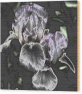 Shiny Irises Wood Print