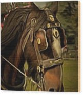 Shire Horse Wood Print
