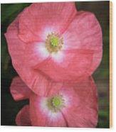 Shirley Poppy 2018-15 Wood Print