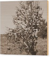 Shoe Tree In Sepia Wood Print