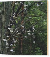 Shoe Tree Wood Print