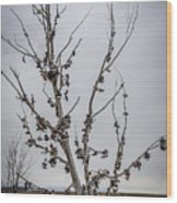 Shoe Tree Wood Print
