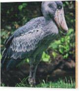 Shoebill Stork Side Portrait Wood Print