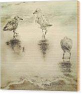 Shore Birds At Sunset Wood Print