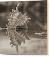 Shore Shell In Sepia Wood Print