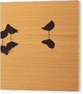 Shorebirds On The Sea At Sunrise Wood Print