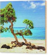 Shoreline At Makalawena Wood Print