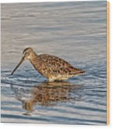 Short-billed Dowitcher Wood Print
