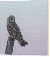Short-eared Owl 2018-5 Wood Print