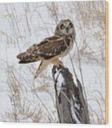 Short Eared Owl Wood Print