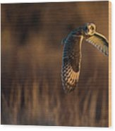 Short-eared Owl Banking Wood Print
